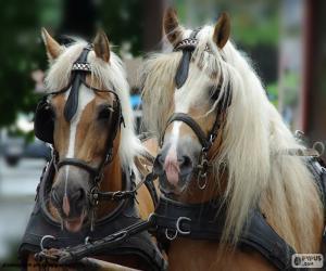 Puzle Cavalos de esboço