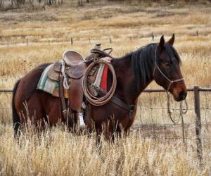 Puzle Cavalos de um vaqueiro