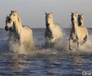Puzle Cavalos na água