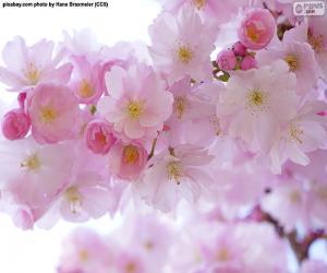 Puzle Cerejeiras em flor