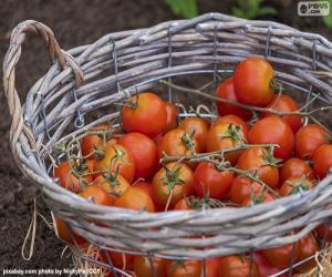 Puzle Cesta de tomate