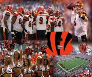 Puzle Cincinnati Bengals