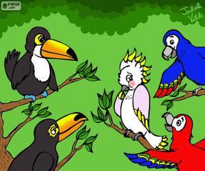 Puzle Cinco aves de Julieta Vitali