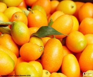 Puzle Citrus japonica ou cunquate