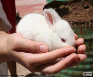 Puzle Coelhinho branco, mãos
