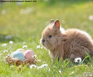 Puzle Coelho e ovos de Páscoa