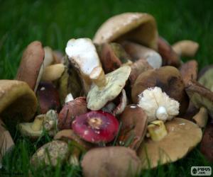 Puzle Cogumelos de vários tipos