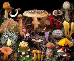 Puzle Cogumelos