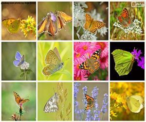 Puzle Colagem de borboletas