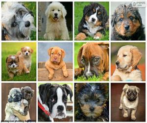 Puzle Colagem de cães