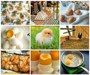 Puzle Colagem de ovo de galinha