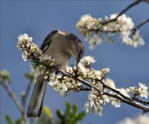 Puzle Colibri picando uma flor