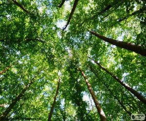 Puzle Copas das árvores