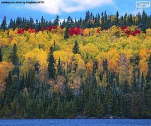 Puzle Cores de outono