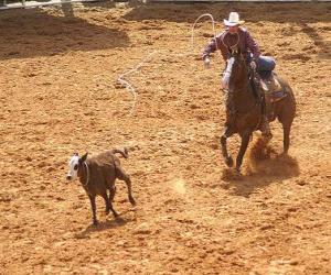 Puzle Cowboy ou vaqueiro que monta um cavalo e que trava uma cabeça de gado com o lasso