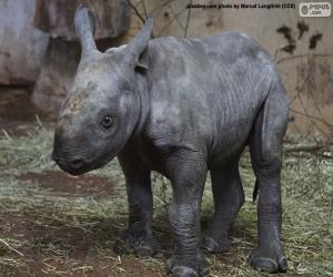 Puzle Criação de rinoceronte-negro