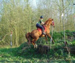 Puzle Curso técnico Equestre Concorrência, testa a compreensão entre cavalo e cavaleiro através de vários testes.