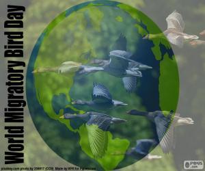 Puzle Día Mundial de las Aves Migratorias
