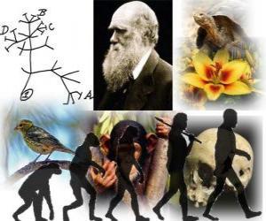 Puzle Dia de Darwin, Charles Darwin nasceu em 12 fevereiro de 1809. Árvore de Darwin, o primeiro esquema de sua teoria da evolução