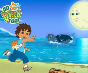Puzle Diego na praia e uma tartaruga marinha na água