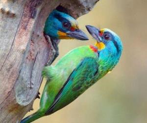 Puzle dois belos pássaros