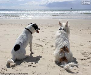 Puzle Dois cães na praia