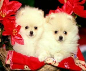 Puzle dois cães ao lado de uma plantas Natal