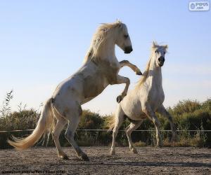 Puzle Dois cavalos brancos