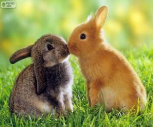Puzle Dois coelhos bonitos cara a cara