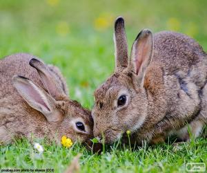 Puzle Dois coelhos comendo