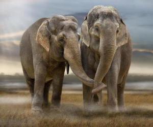 Puzle Dois elefantes grandes com troncos entrelaçados