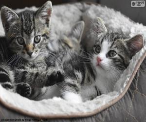 Puzle Dois gatinhos fofos