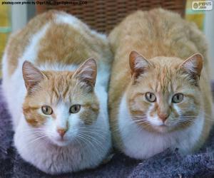 Puzle Dois gatos