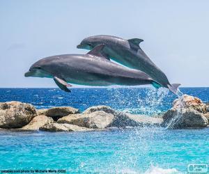 Puzle Dois golfinhos pulando