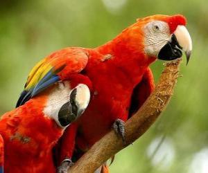 Puzle Dois periquitos ou papagaios em uma filial