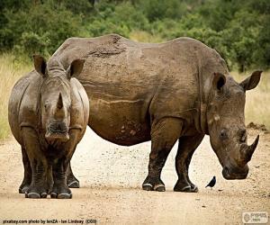 Puzle Dois rinocerontes