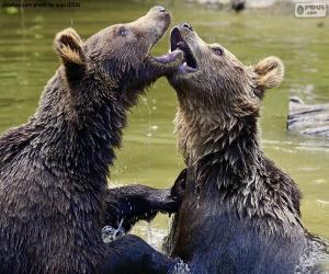 Puzle Dois ursos na água