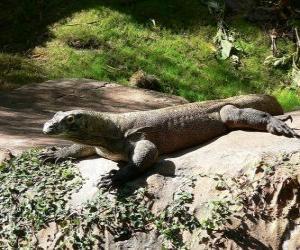 Puzle Dragão-de-komodo ou crocodilo-da-terra