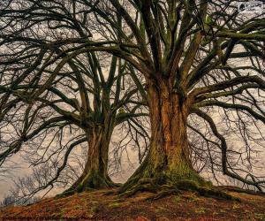 Puzle Duas árvores velhas