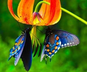 Puzle Duas borboletas em uma flor