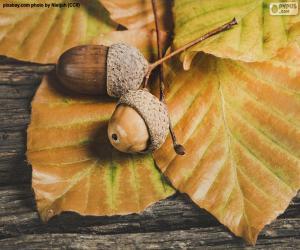 Puzle Duas sementes e folhas de outono