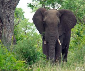 Puzle Elefante grande nas madeiras