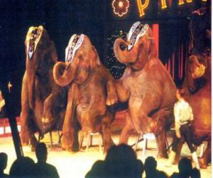 Puzle Elefantes treinados