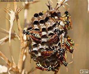 Puzle Enxame de vespas