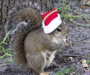 Puzle Esquilo com o chapéu de Papai Noel