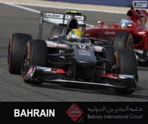 Puzle Esteban Gutierrez - Sauber - Circuito internacional do Bahrain 2013
