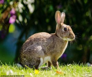 Puzle Europeia de coelho