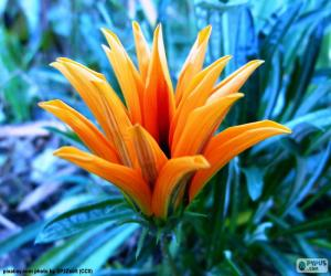 Puzle Exótica flor cor laranja