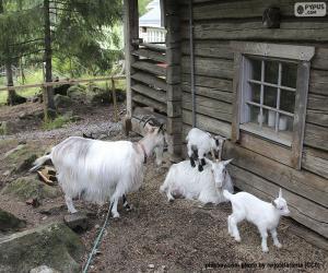 Puzle Família de cabras