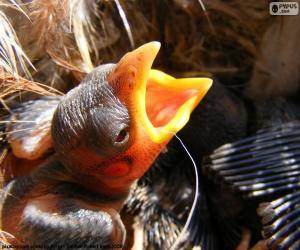 Puzle Filhote de ave